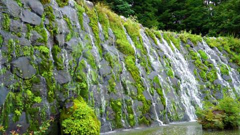 Waterfall (general-purpose, Shiraito Falls, Nature, and green) Footage