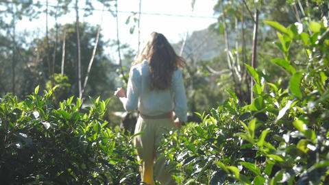 graceful girl walks among lush tea bushes slow motion Stock Video Footage
