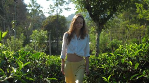 blonde girl walks among tea bushes at sunshine slow motion Live Action