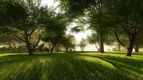 The Landscape Of The City Park Animation