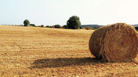 Moving through hay field. POV view Live Action