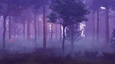 Magical misty forest at sunset time lapse Footage