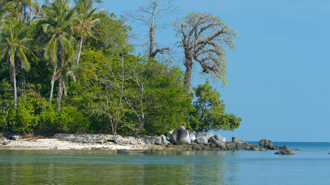 Deserted. Rocky. Natural. Tropical Beach with Natural Trees and Vegetation Live Action
