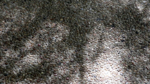 Abstract nature. Shadow of monastery bamboo leaves on gravel floor Live Action