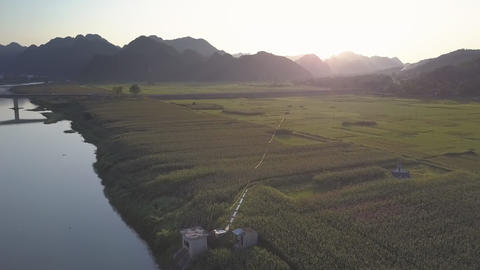 upper view bright sun shines on peanut fields near river Live Action