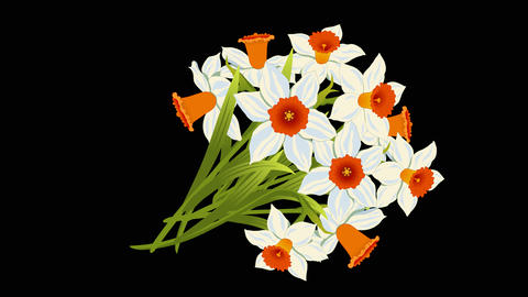 Bouquet White Narcissus animated Animation