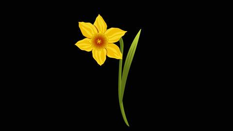 Narcissus y 2 3 Animation
