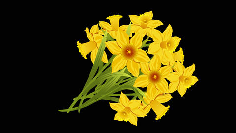Bouquet Yellow Narcissus animated Animation