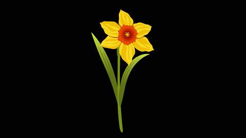 Narcissus yr 2 2 Animation