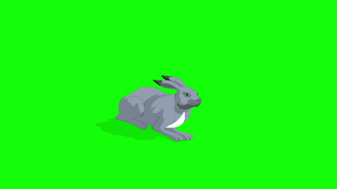 Gray Hare Lying Isolated on Green Screen Animation