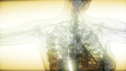 X-Ray Image Of Human Body Live Action