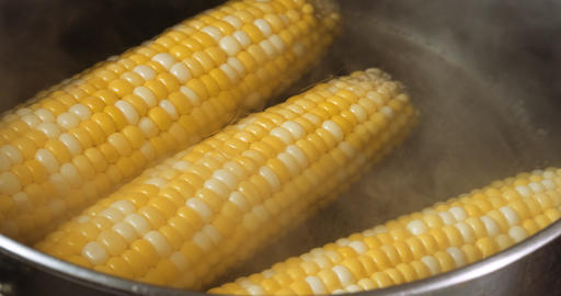 Ripe corn in boiling water Live Action
