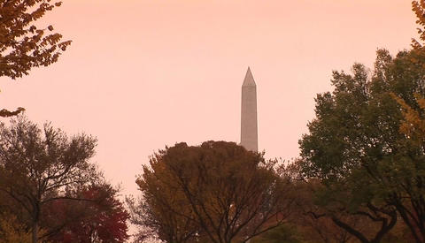 The Washington Monument rises above trees in Washington D.C Footage