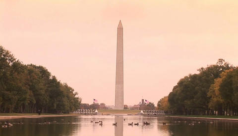 The Washington Monument rises above the reflecting pool in Washington D.C Footage