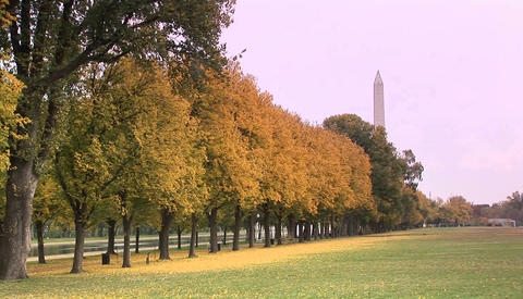 The Washington Monument rises above the trees in a park... Stock Video Footage