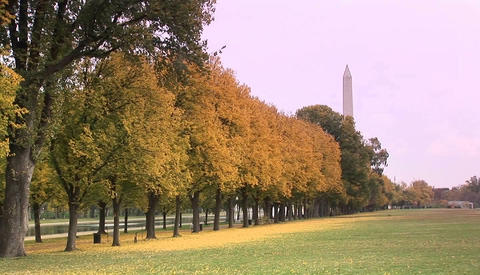 The Washington Monument rises above the trees in a park in Washington D.C Footage