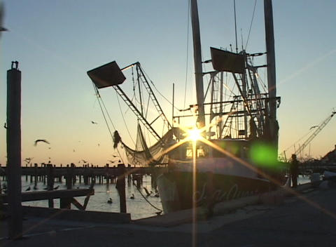 Medium shot of birds flying over a fishing boat Stock Video Footage