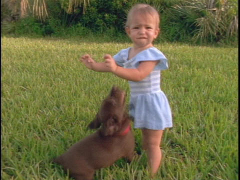 A toddler falls as Labrador puppies become too playful Stock Video Footage