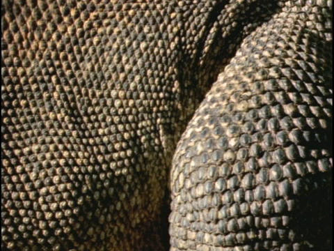 Dry scales cover reptiles Stock Video Footage