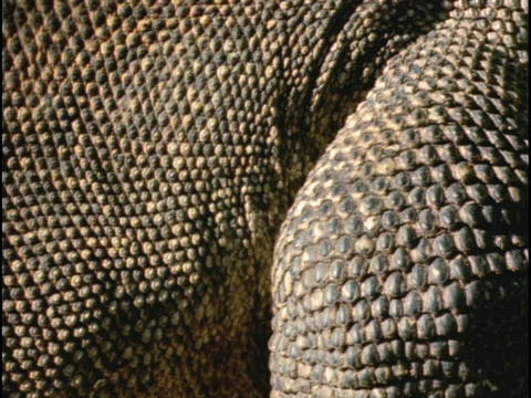 Dry scales cover reptiles Live Action
