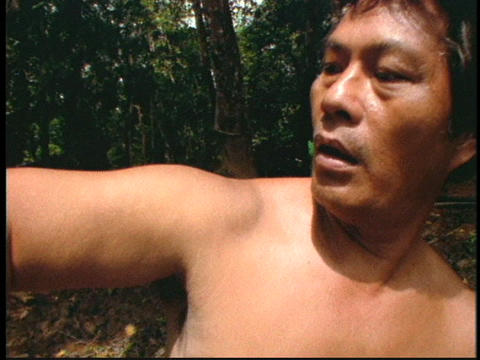 A centipede crawls on a man's arm in a Borneo jungle in Indonesia Footage