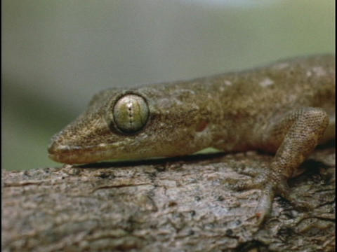 A salamander lays on a log Stock Video Footage