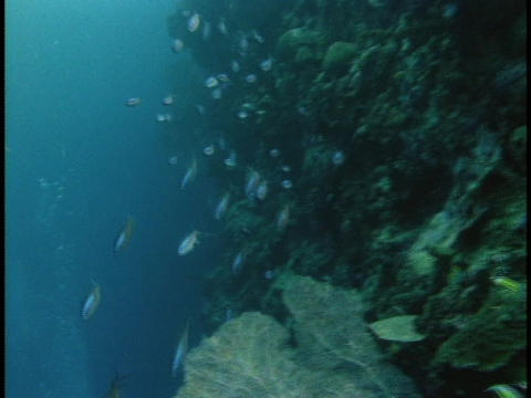 Tropical fish swim along a coral reef Stock Video Footage