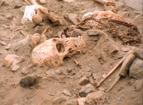 Medium-shot of human bones lying in an archeological site Stock Video Footage