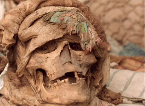Panning-shot of a human skull found at an archaeological... Stock Video Footage