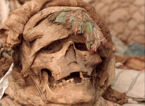 Panning-shot of a human skull found at an archaeological site Footage