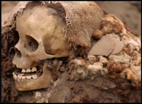 Slow pan revealing human skull Stock Video Footage