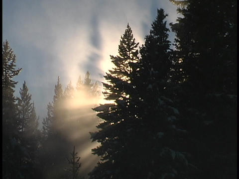 Sun rays shine through evergreen branches Stock Video Footage