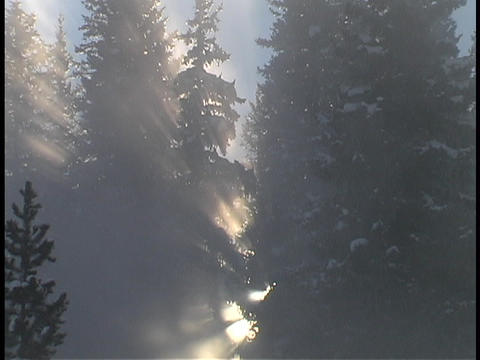 Sun rays shine through the tree branches Footage