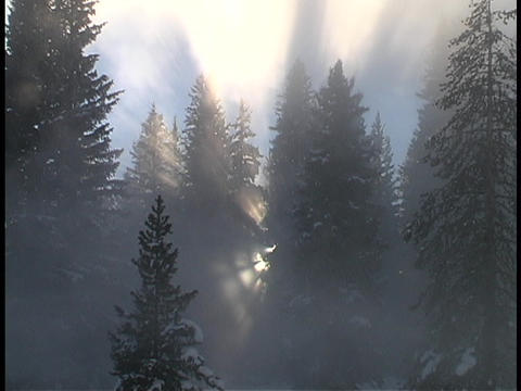 Sun rays shine through the tree branches Stock Video Footage