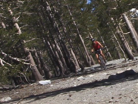 A mountain biker rides down a trail Footage