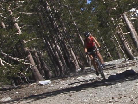 A mountain biker rides down a trail Stock Video Footage
