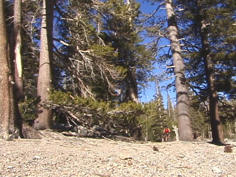 A mountain biker rides down a trail Stock Video Footage