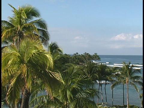 Waves roll beneath Hawaiian palm trees Stock Video Footage
