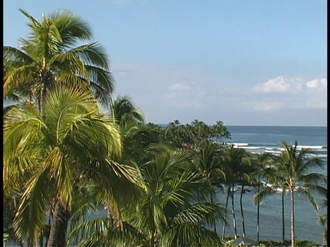 Waves roll beneath Hawaiian palm trees Footage