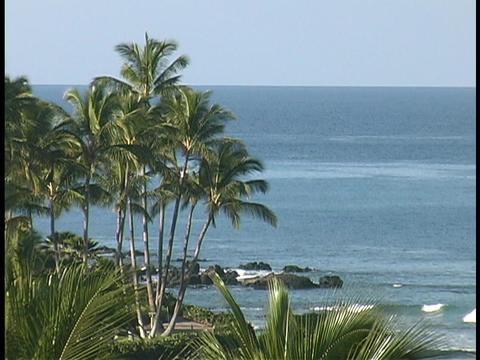 Palm trees grow on a Hawaiian beach Footage