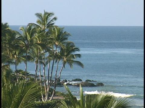 Palm trees grow on a Hawaiian beach Stock Video Footage