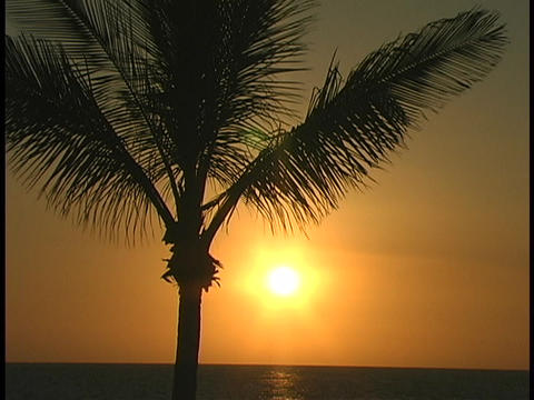 A palm tree sways gently in the breeze at golden hour Stock Video Footage