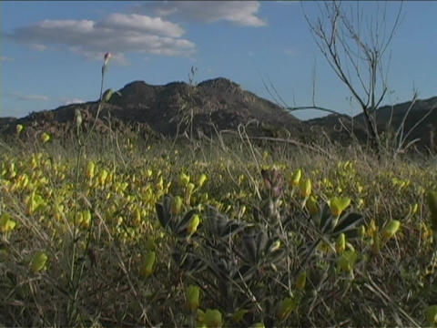 Wildflowers shake in the breeze Stock Video Footage
