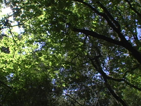 Light shines through leaves on trees Stock Video Footage