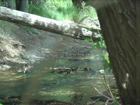 A spider web blows in the breeze in front of a flowing stream Footage