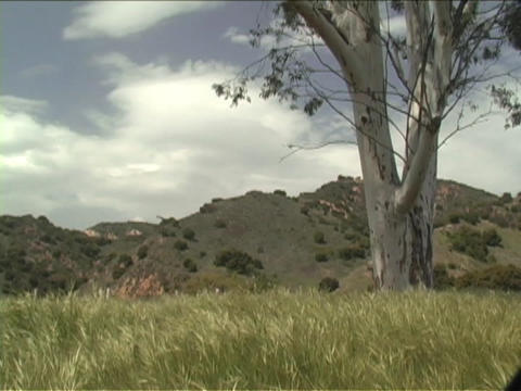 Tall grasses blows in the breeze Stock Video Footage