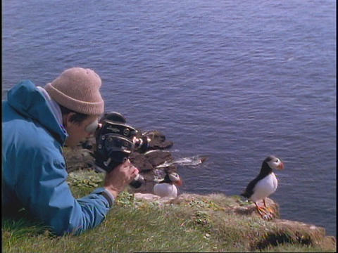 A man shoots video of a Puffin Footage