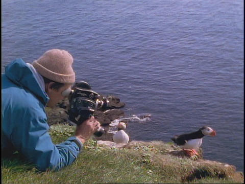 A man shoots video of a Puffin Stock Video Footage