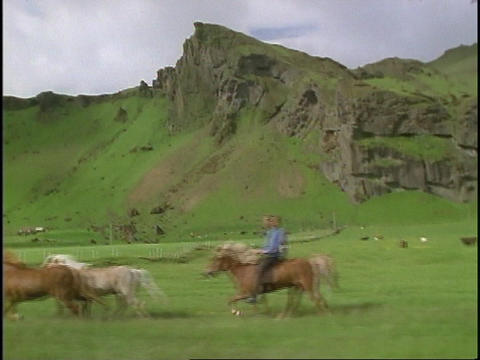 A cowboy herds horses across the fields of Iceland Stock Video Footage