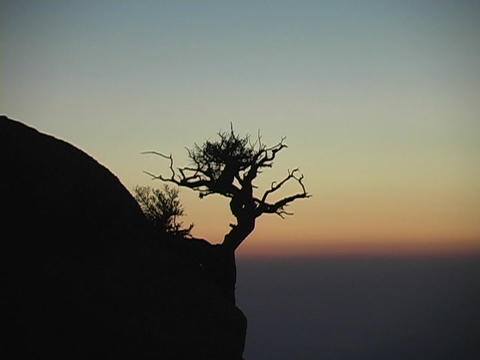 A lone tree grows on the side of a mountain silhouetted by the sunset Footage